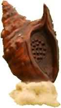 Loa trang trí sân vườn hình con ốc ngộ nghĩnh AZ-308
